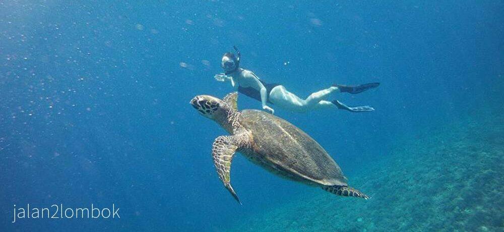 シュノーケル Snorkel Tour